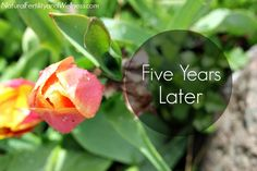 Infertility, five years later