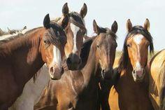 caballos curiosos