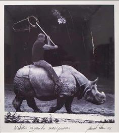 El Hurgador [Arte en la Red]: Rinocerontes (LII)- Fernando Álamo