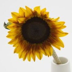 Gardeners grow sunflowers for their beauty and their sweet-tasting seeds. Instead of devouring the seeds and destroying the flower, turn these ornate reminders of summer into a family heirloom. Dwarf Sunflowers, Tulips, Sunflower Garden, Sunflower Bouquets, Sunflower Crafts, Sunflower Art, Diy Shadow Box, How To Preserve Flowers, Gardens