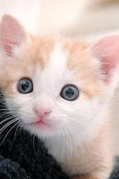 Look at these beautiful eyes....                              …