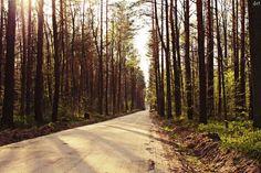#źródłakrólewskie #las #drzewa