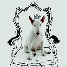 Resultado de imagem para desenho bull terrier