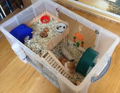 Proud of your hamsters cage - Page 594 - Supplies & Accessories - Hamster Hideout Forum Diy Hamster House, Dwarf Hamster Cages, Hamster Bin Cage, Cool Hamster Cages, Gerbil Cages, Diy Guinea Pig Cage, Hamster Habitat, Hamster Care, Pets
