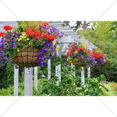 Hanging Flower Baskets · GL Stock Images