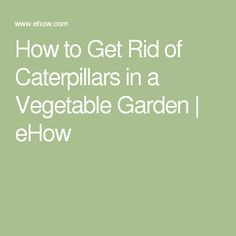 How to Get Rid of Caterpillars in a Vegetable Garden | eHow