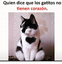 21 Ideas For Memes En Espanol Frases Chistes Kittens Cutest, Cute Cats, Funny Cats, Youtube Cats, Find Memes, Funny Spanish Memes, Pinterest Memes, Boyfriend Memes, Funny Jokes