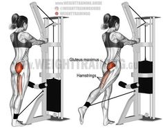 Standing cable hip extension. A unilateral isolation exercise. Target muscle: Gluteus Maximus. Synergists: Hamstrings (Biceps Femoris, Semitendinosus, and Semimembranosus).