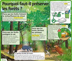 Fiche exposés : Pourquoi faut-il préserver les forêts ?
