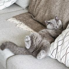 Have a relaxed Sunday