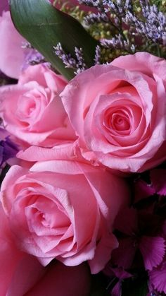 Pink roses for my lovely daughter...♥ ~ Zeta M Mood