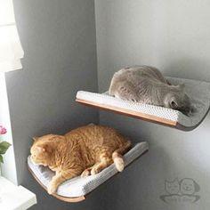 colchon-ovalado-gatos
