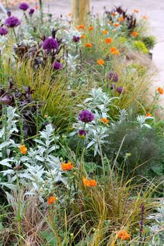 Planting Inspiration from Chlesea Flower show 2012 by Rochelle Greayer - Grasses, Silver Orange and Purple