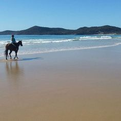 Bucket list ✔️ Across the river from Noosa Heads and Noosaville is Noosa North Shore... A long stretch of white sand, dunes and beautiful coastline as well as the perfect place for a beach horse ride!