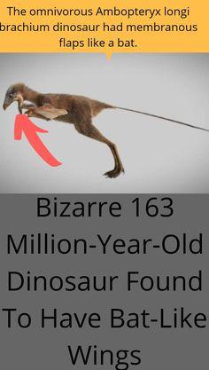 Family Relations, Prehistoric Animals, Wtf Fun Facts, Weird Pictures, Weird Art, Crazy People, Weird World, Mind Blown