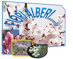 fotocomposizione libera fatta con varie funzionalità di Power  Point 1E Alberghiero - Fotocomposizione - Community - Google+