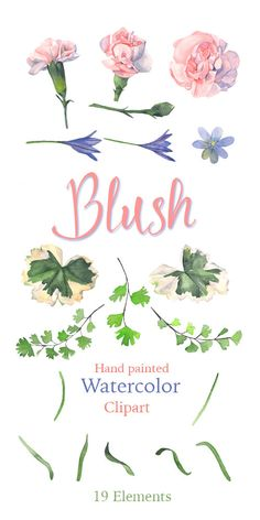 Blush: watercolor flowers clipart Carnations Maiden от Whizzprints