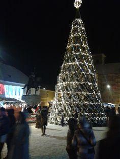 Bradul de Crăciun 2013  www.antrecalba.ro