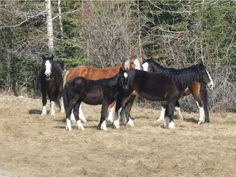 A group of wild horses by a highway in north central Alberta are shown on May 5, 2014. The Alberta government is looking at rounding up several of the horses as part of a cull.