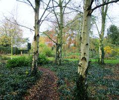 Goltho Garden