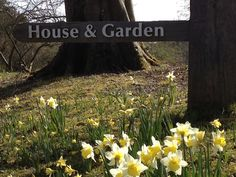Our very own Lakeland field of daffodils.  www.halecat.co.uk