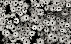 tumblr_static_black_sunflowers.jpg (1920×1200)