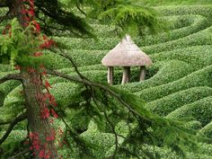 Glendurgan maze seen through the branches of the lovely old cedar tree which we lost in October 2013. The summer-house is being rebuilt in 2015 to a new & improved design but it'll still be just as charming.