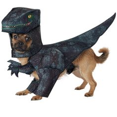 Pet Halloween Costumes, Dog Costumes, Dog Halloween, Rex Costume, Dinosaur Costume, Halloween 2020, Halloween Outfits, Halloween Party, Baby Animals Super Cute