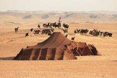 normaden - Westelijke Sahara Marokko