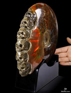 Skullis.com - Ammonite Fossil Crystal Skulls Sculpture Ancient Council - Ammonite Fossil with Ammolite Carved Crystal Skulls Sculpture with Black Obsidian Stand.  Price: US $3,850