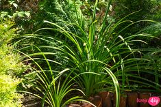 19 roślin, które będą rosły w zacienionych miejscach! - Twoje DIY Bonsai, Diy And Crafts, Pergola, Plants, Gardening, Outdoor Pergola, Lawn And Garden, Plant, Planets