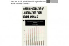 10 Producers of Leather