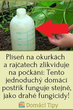 Vegetable Garden, Pergola, Flora, Health Fitness, Home And Garden, Gardening, Outdoor, Beauty, Lawn And Garden