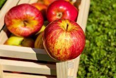 Co se stane s jablky ponořenými do horké vody?