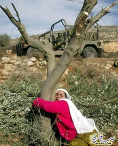 Anguish. Palestinian woman tries to stop Israeli forces from bulldozing her olive trees and home.  It's all gone now.