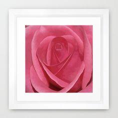 Blushing Rose Framed Art Print