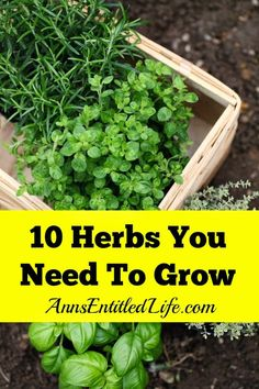 10 Herbs You Need To Grow - Fresh herbs have a long history of medicinal and culinary uses. And some herbs, have both properties. Depending on your goals, these 10 versatile herbs are ideal for most gardeners.