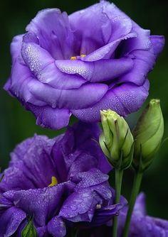 1257 Best Master Gardening Images Beautiful Flowers Exotic