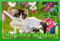Quotes happy cute god ideas for 2019 Foster Kittens, Cats And Kittens, Happy Tuesday Morning, Tuesday Greetings, Bon Mardi, Good Morning Good Night, Funny Animal Pictures, Happy Quotes, Blessed Quotes