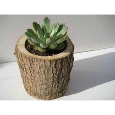 Boomstammetje met vetplantje, mooi in natuurlijke pot