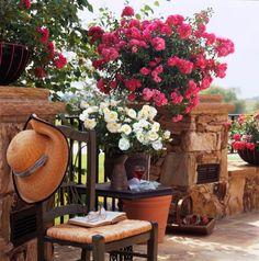 "Flower Carpet ""Pink"" Standard (tree rose) with Flower Carpet ""White"""