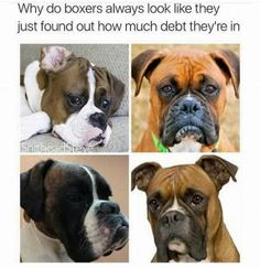 Why do boxers always look like they just found out how much debt they're in #lol