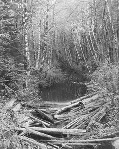 Alder Creek. Taylor Arm River Sproat Lake.  I had shot all of my 8 x 10 black & white sheet film by the time I came across this amazing scene while exploring the backroads behind Sproat Lake just a few days ago. I found a gas station in Port Alberni where after taping the door seams with black Tuck tape I managed to create a makeshift darkroom for a few minutes inorder to reload my wooden film holders and return the next day to capture this photograph. I immediately returned to my darkroom…