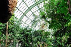 Serre des forêts tropicales humides - Jardin des Plantes © MNHN - FG Grandin