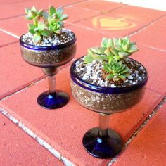 Fun table top gardens can be used as centerpieces for a party.Your guests can take home, replant  use the glass for margaritas!