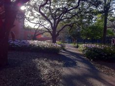 cell phone pic,rice university