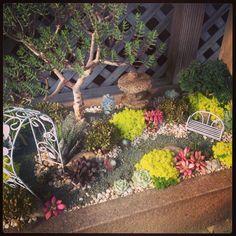 Cute Miniature Succulent Garden