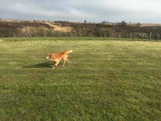 Bess having a run around the camping field.