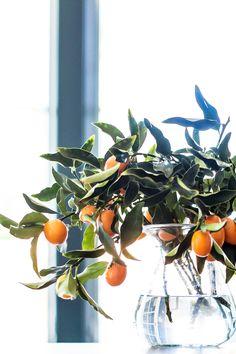 Kumquats || Studio McGee