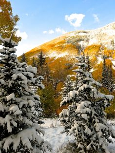 """The Awe of an Aspen Autumn - such an early heavy snow (as much as 7"""") and the aspen trees have not yet lost their leaves."""